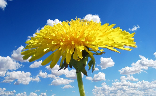 flower-1344317_1920